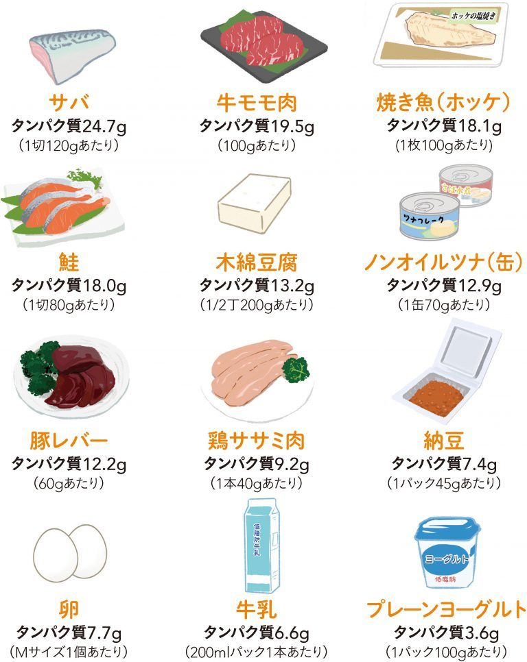 夏バテ防止にタンパク質!?